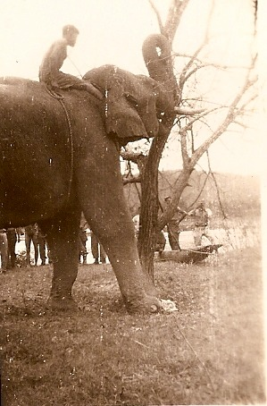 Elephants Clearing Camp Landis